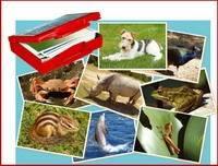 Juego Con Fotografias: Animales